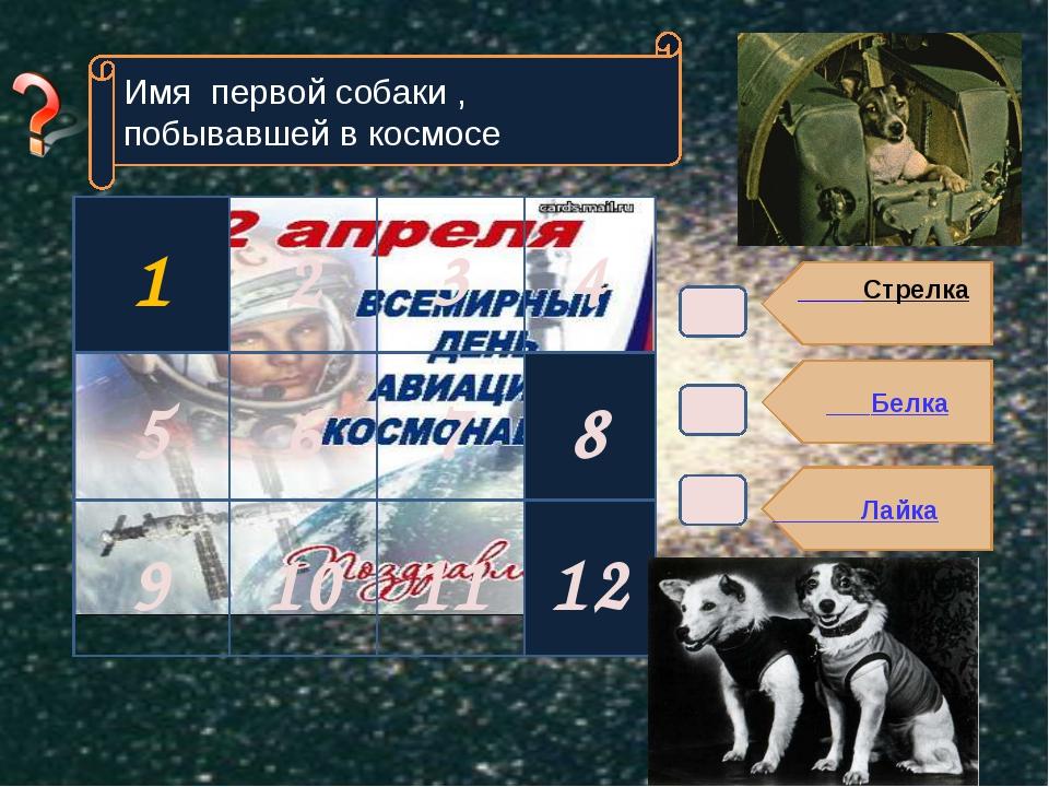 Стрелка Белка Лайка Имя первой собаки , побывавшей в космосе 8 12 1 2 3 9 10...