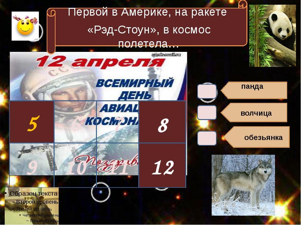 панда волчица обезьянка 5 Первой в Америке, на ракете «Рэд-Стоун», в космос...