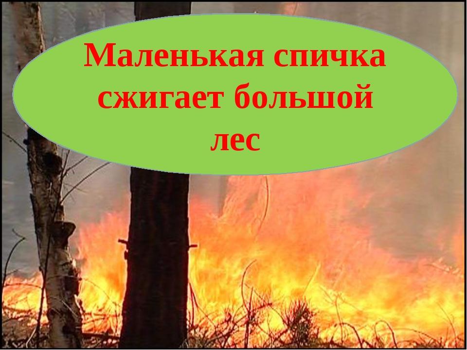 Маленькая спичка сжигает большой лес