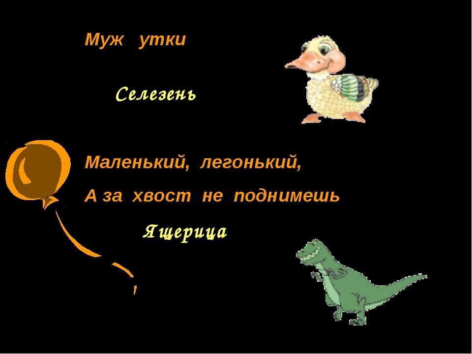 Муж утки Селезень Маленький, легонький, А за хвост не поднимешь Ящерица