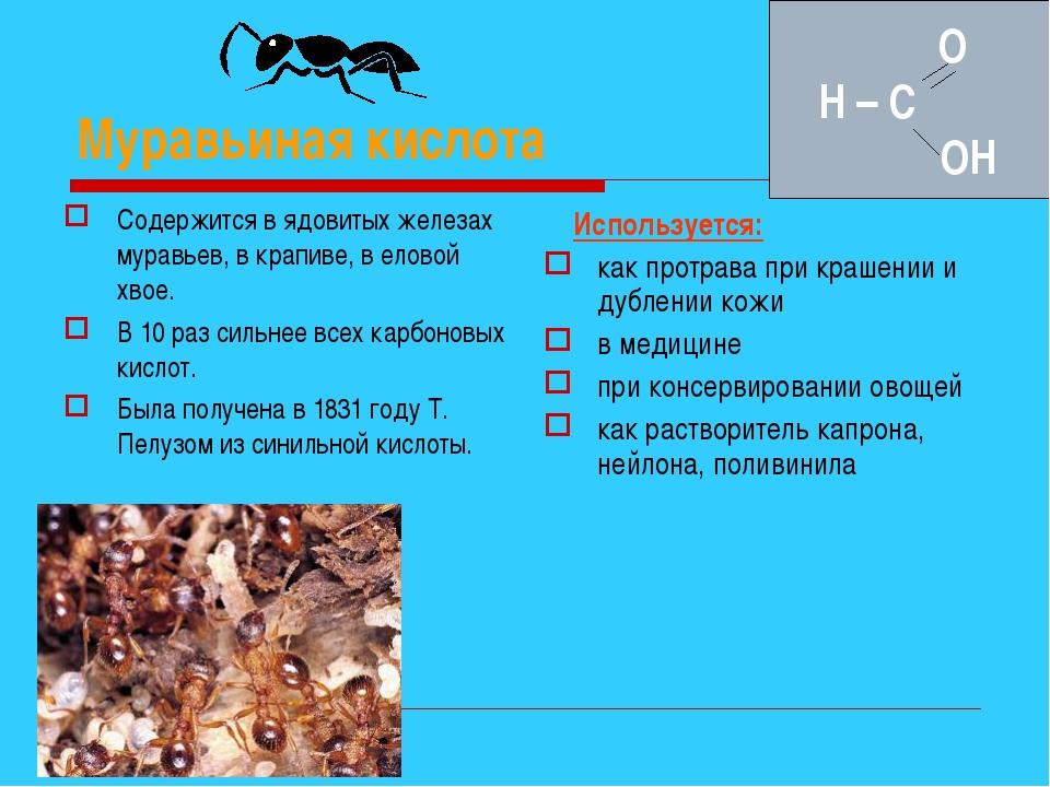 Муравьиная кислота Содержится в ядовитых железах муравьев, в крапиве, в елово...