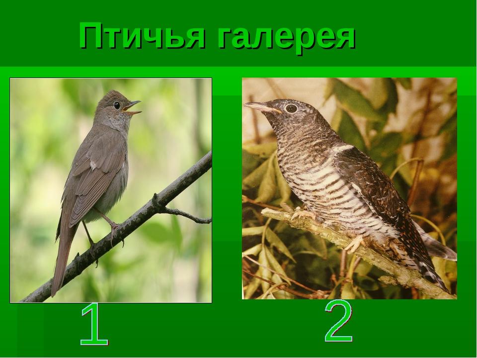 Птичья галерея