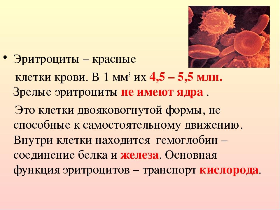 Эритроциты – красные клетки крови. В 1 мм3 их 4,5 – 5,5 млн. Зрелые эритроци...