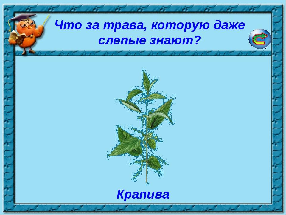* Что за трава, которую даже слепые знают? Крапива