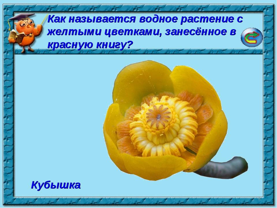 * Кубышка Как называется водное растение с желтыми цветками, занесённое в кра...