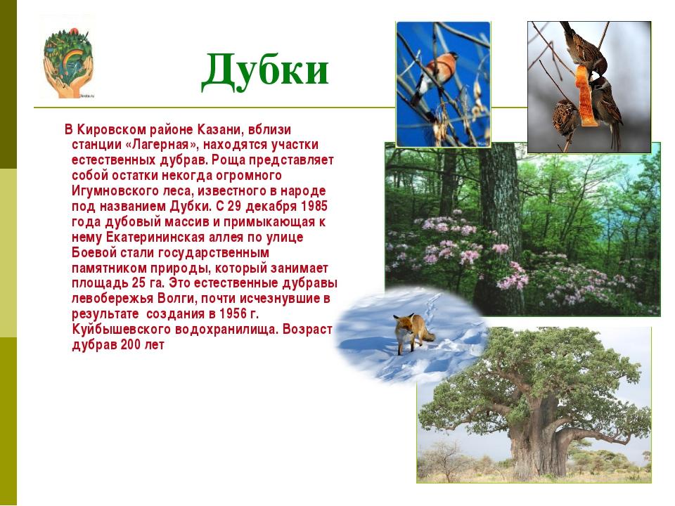 В Кировском районе Казани, вблизи станции «Лагерная», находятся участки есте...
