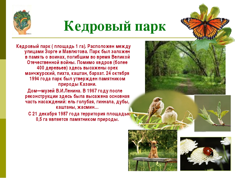 Кедровый парк ( площадь 1 га). Расположен между улицами Зорге и Мавлютова. П...