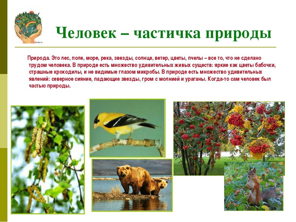 Природа. Это лес, поле, море, река, звезды, солнце, ветер, цветы, пчелы – вс...