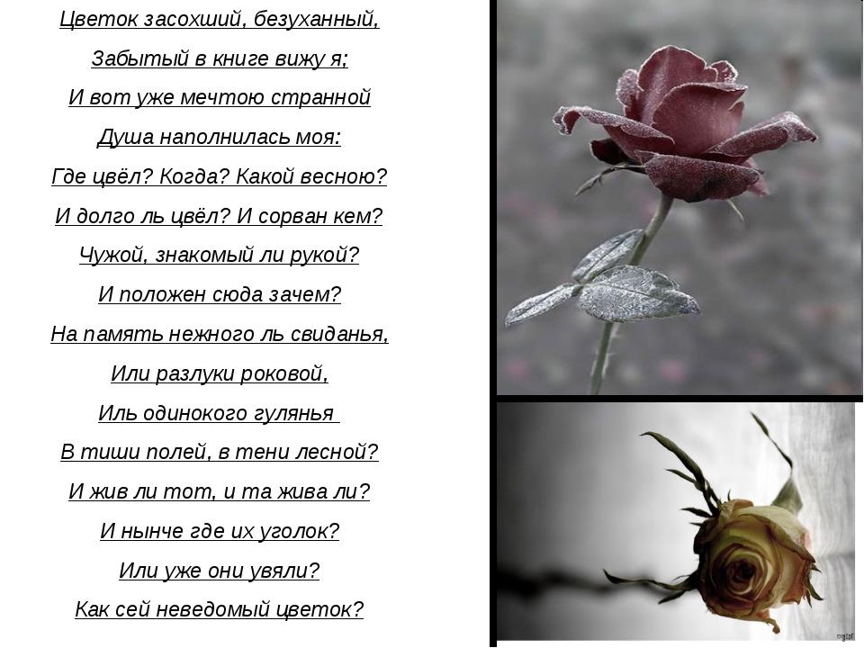 Цветок засохший, безуханный, Забытый в книге вижу я; И вот уже мечтою странно...