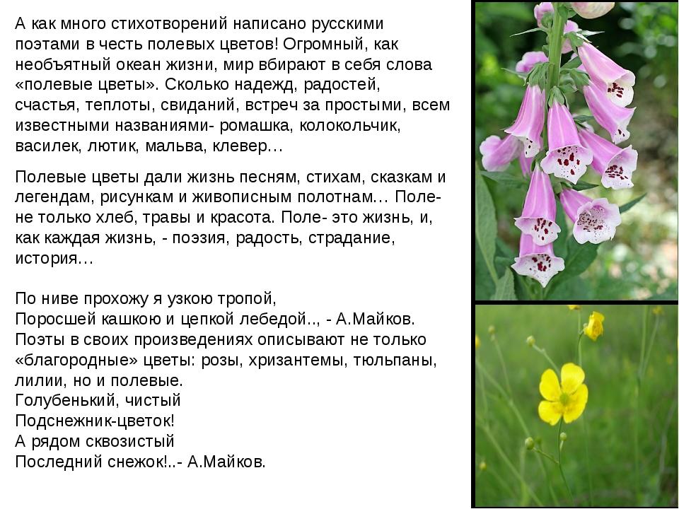 А как много стихотворений написано русскими поэтами в честь полевых цветов! О...