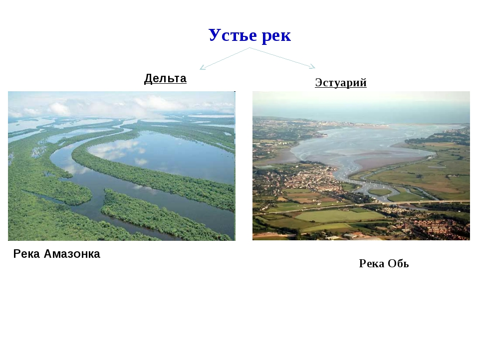 Река Амазонка Устье рек Дельта Эстуарий Река Обь