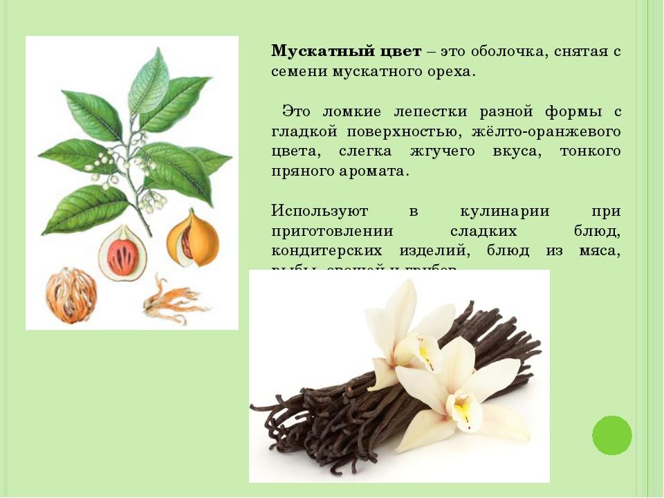 Мускатный цвет – это оболочка, снятая с семени мускатного ореха. Это ломкие л...