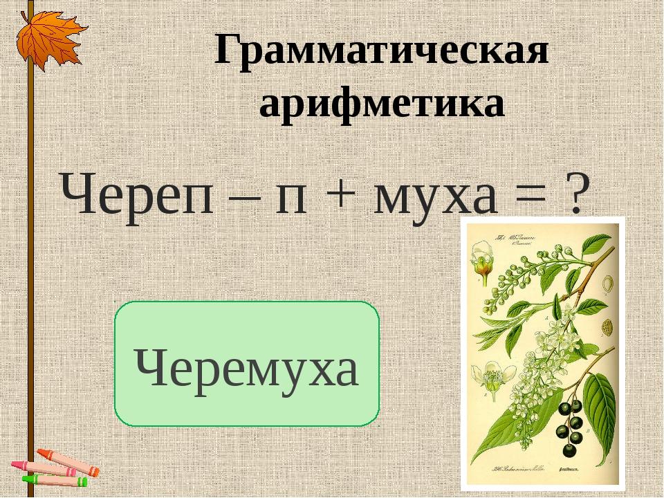 Грамматическая арифметика Череп – п + муха = ? Черемуха