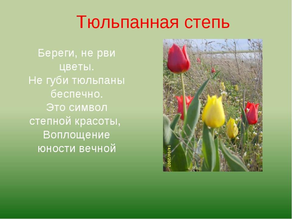 Береги, не рви цветы. Не губи тюльпаны беспечно. Это символ степной красоты,...