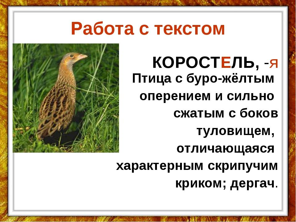 Работа с текстом КОРОСТЕЛЬ,-я Птица с буро-жёлтым оперением и сильно сжатым...