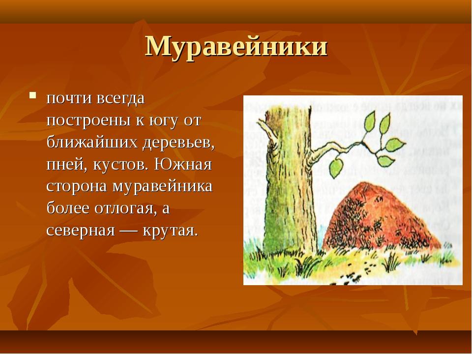 Муравейники почти всегда построены к югу от ближайших деревьев, пней, кустов....