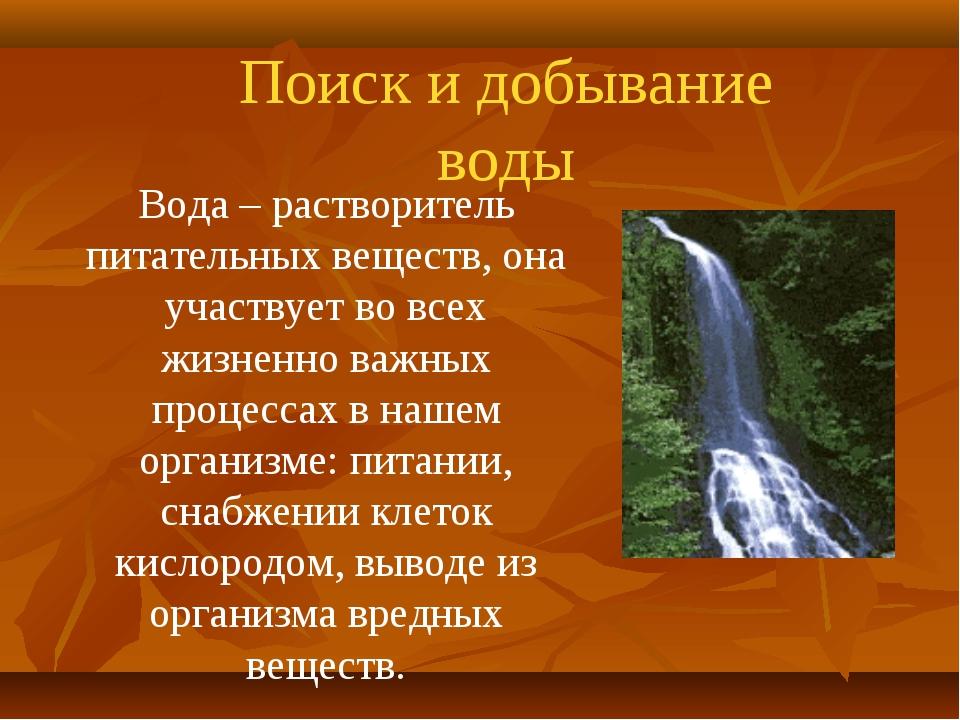 Поиск и добывание воды Вода – растворитель питательных веществ, она участвует...