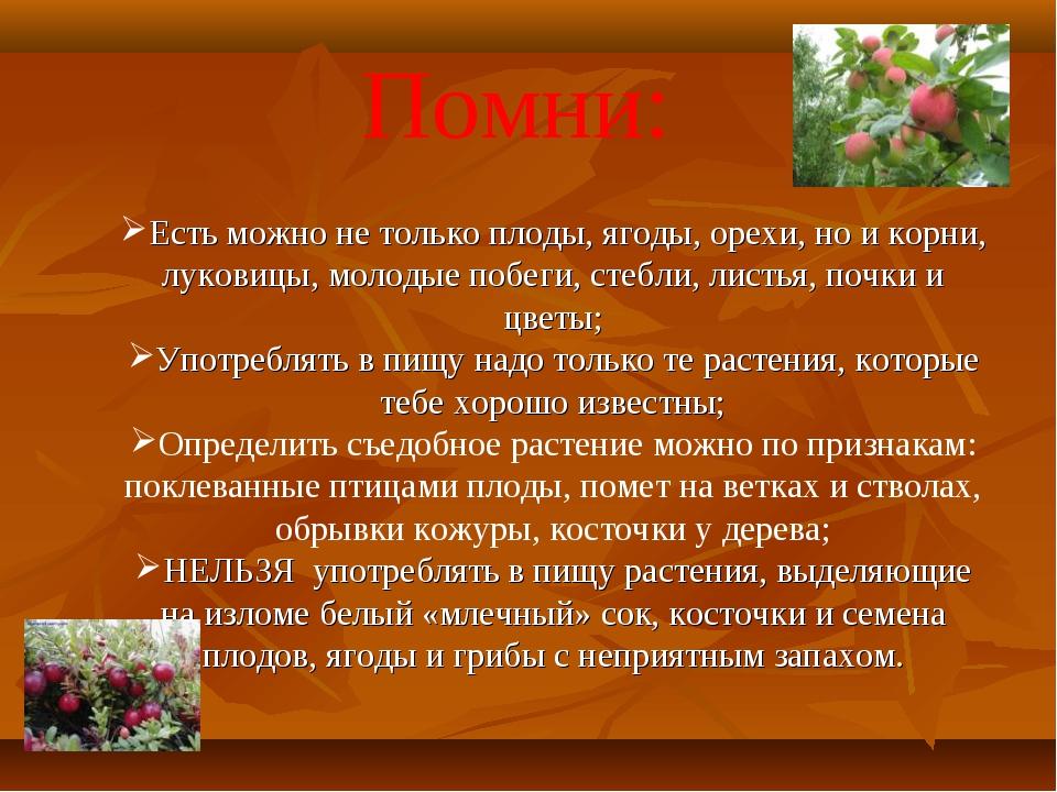 Помни: Есть можно не только плоды, ягоды, орехи, но и корни, луковицы, молоды...