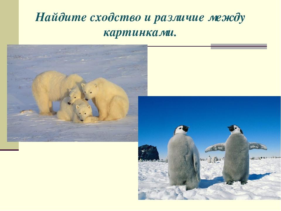 Найдите сходство и различие между картинками.