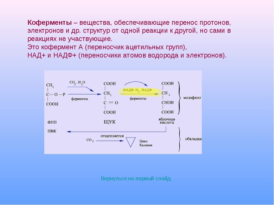 Вернуться на первый слайд. Коферменты – вещества, обеспечивающие перенос про...