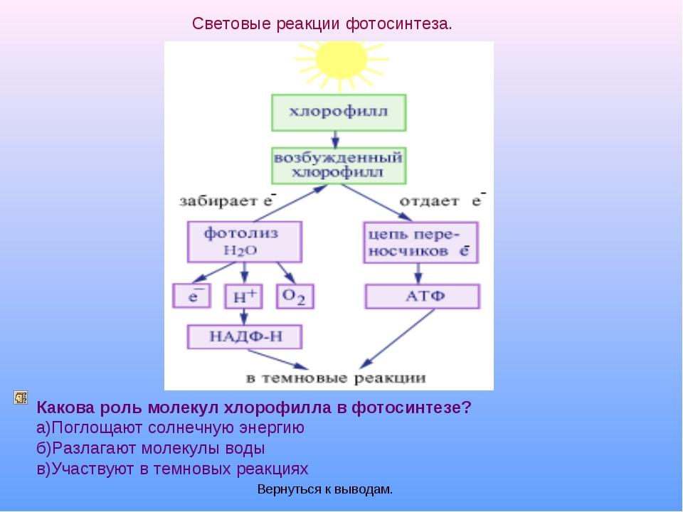 Световые реакции фотосинтеза. Какова роль молекул хлорофилла в фотосинтезе? а...