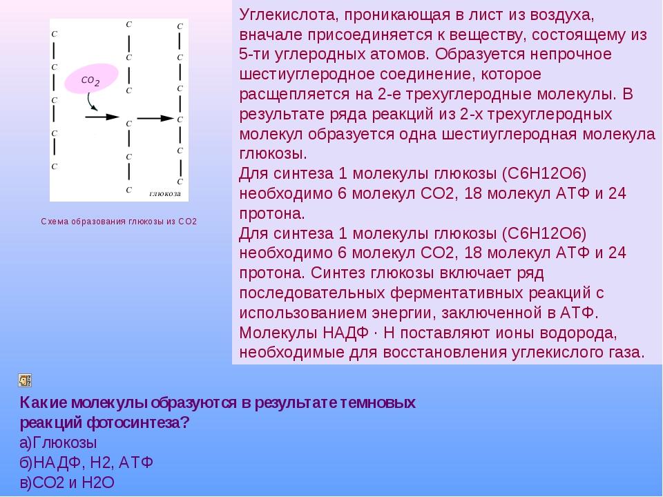 Общая схема цикла Кальвина Схема образования глюкозы из CO2 Углекислота, прон...