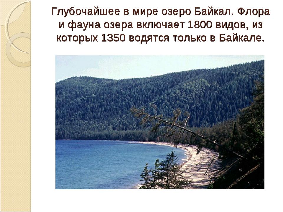 Глубочайшее в мире озеро Байкал. Флора и фауна озера включает 1800 видов, из...