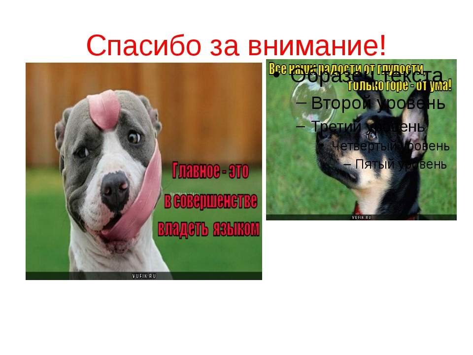 картинка собаки спасибо за внимание утром при прогреве