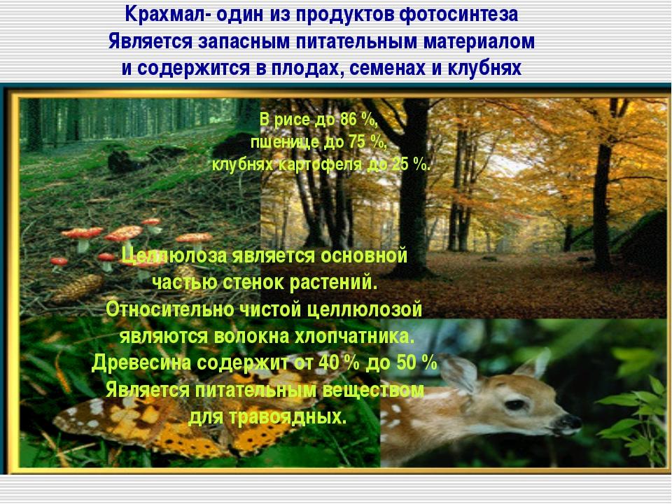 Крахмал- один из продуктов фотосинтеза Является запасным питательным материал...