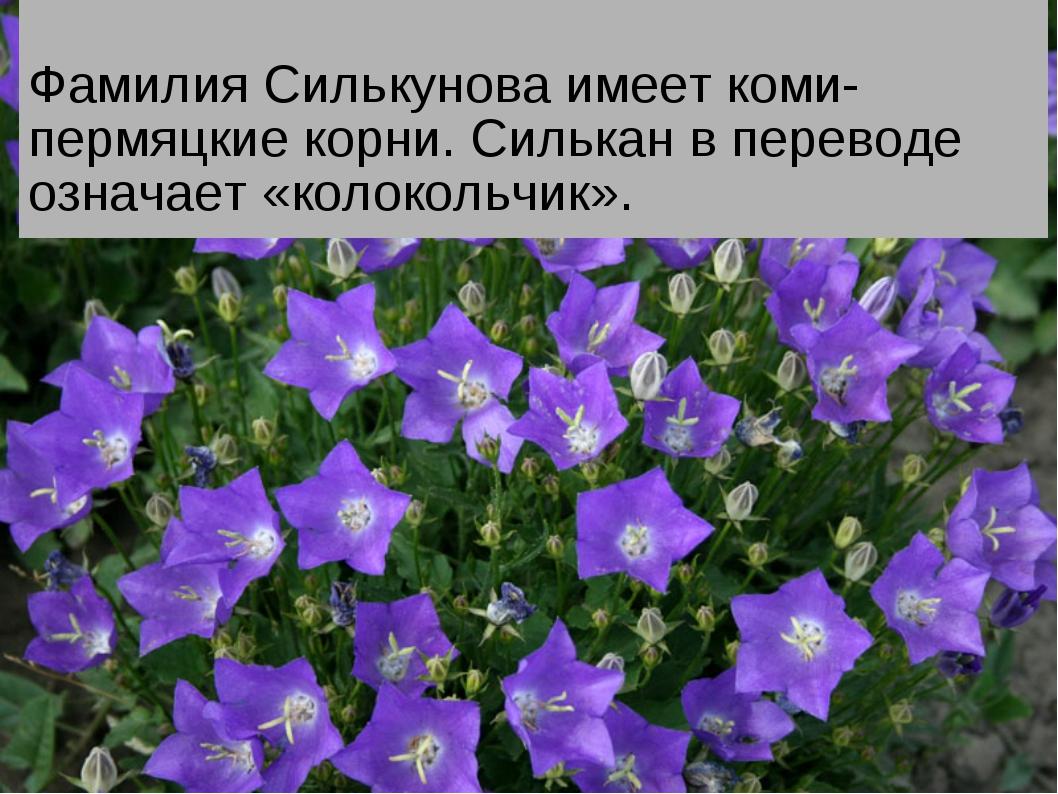 Фамилия Силькунова имеет коми-пермяцкие корни. Силькан в переводе означает «...