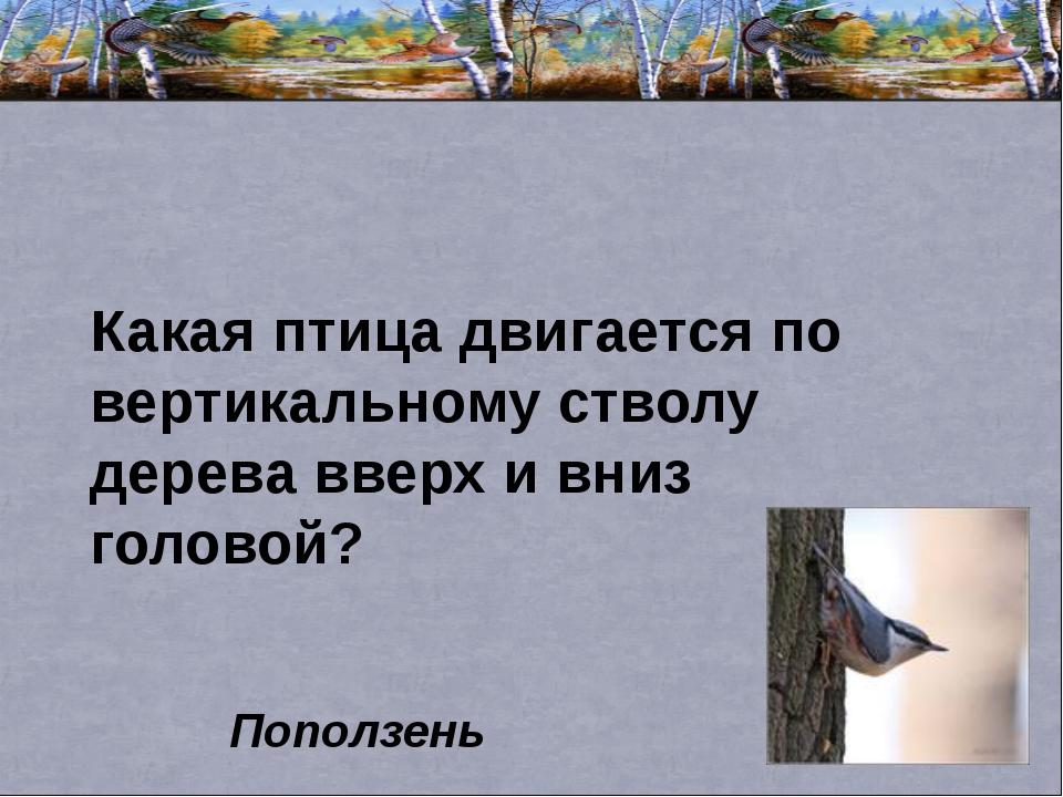 Какая птица двигается по вертикальному стволу дерева вверх и вниз головой? По...