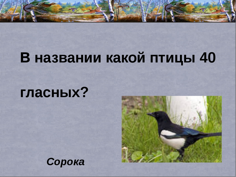 В названии какой птицы 40 гласных? Сорока