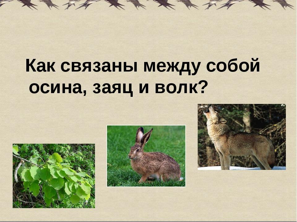 Как связаны между собой осина, заяц и волк?