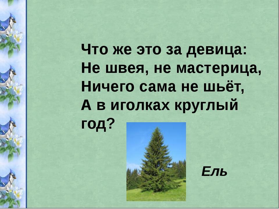 Что же это за девица: Не швея, не мастерица, Ничего сама не шьёт, А в иголках...
