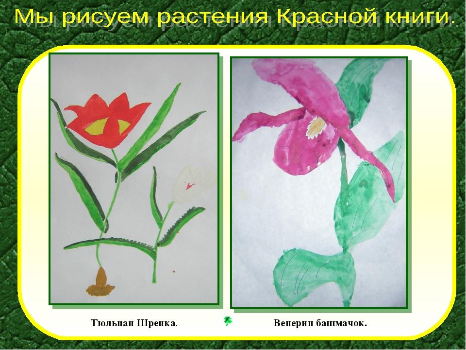 только растения красной книги картинки с описанием как рисовать ландшафт, остаток