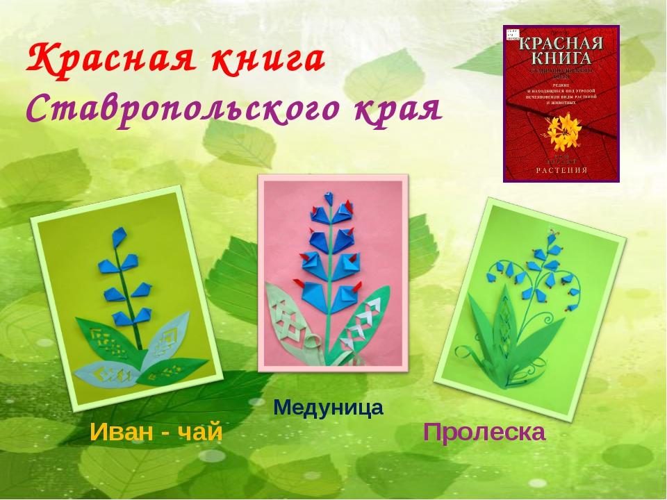 П Красная книга Ставропольского края Иван - чай Медуница Пролеска