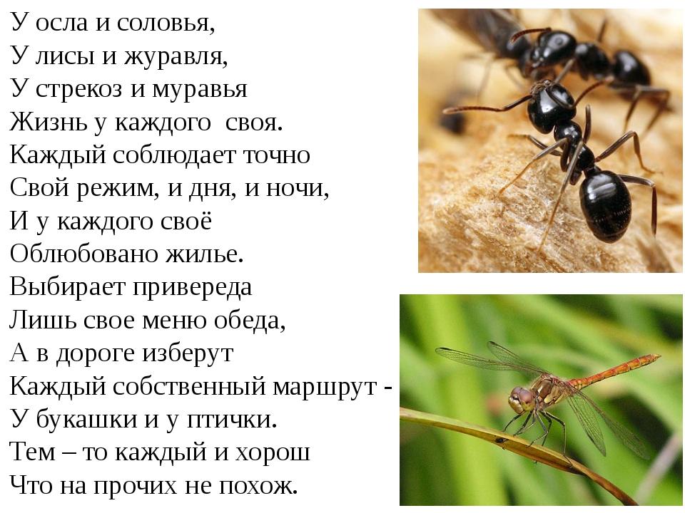 У осла и соловья, У лисы и журавля, У стрекоз и муравья Жизнь у каждого своя....