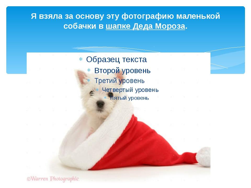 Я взяла за основу эту фотографию маленькой собачки вшапке Деда Мороза.