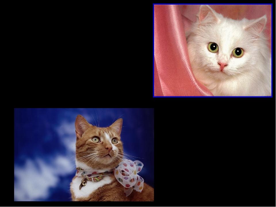 Влияние кошек на здоровье человека