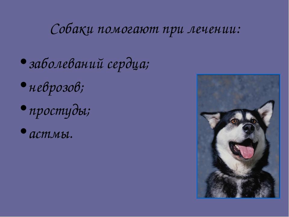 Собаки помогают при лечении: заболеваний сердца; неврозов; простуды; астмы.