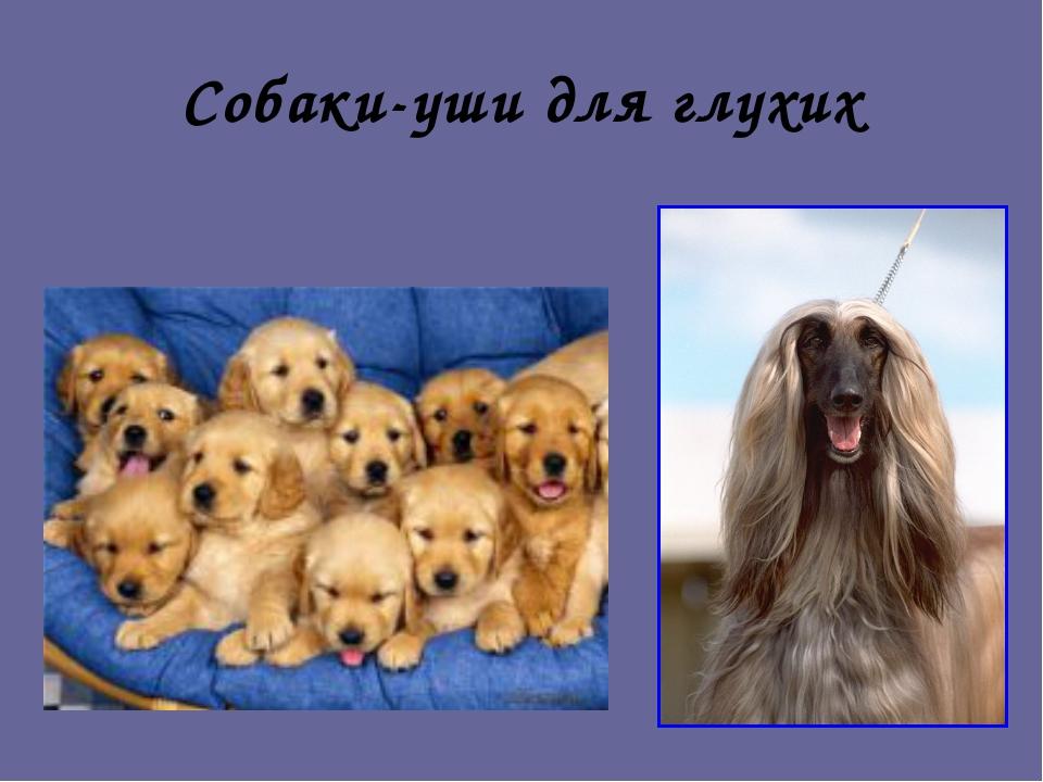 Собаки-уши для глухих