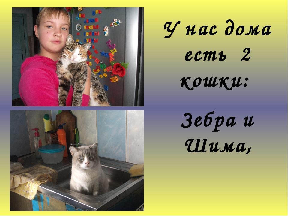 У нас дома есть 2 кошки: Зебра и Шима,