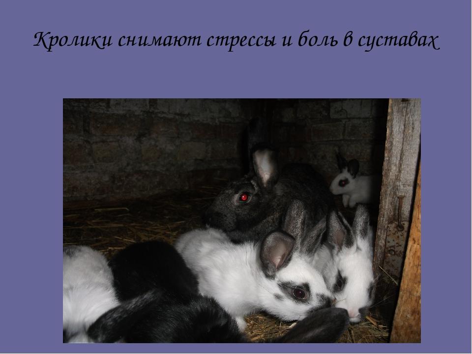 Кролики снимают стрессы и боль в суставах