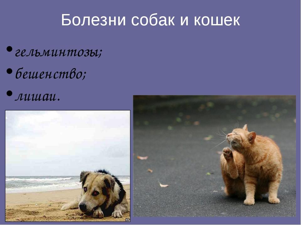 Болезни собак и кошек гельминтозы; бешенство; лишаи.
