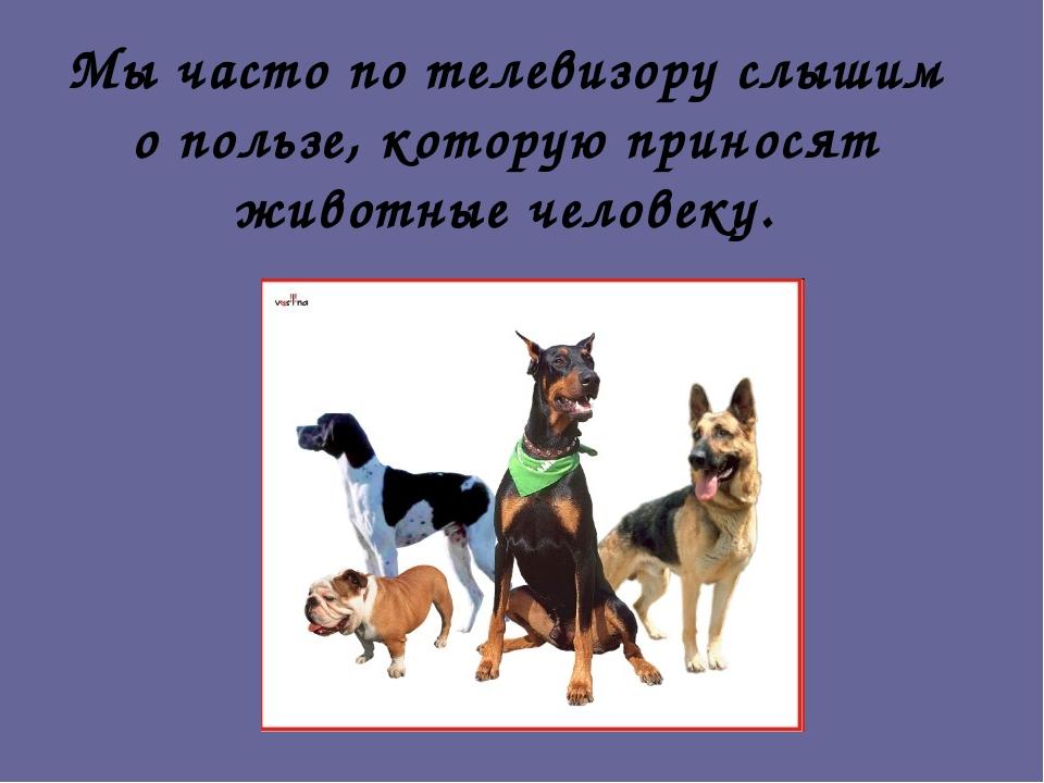 Мы часто по телевизору слышим о пользе, которую приносят животные человеку.