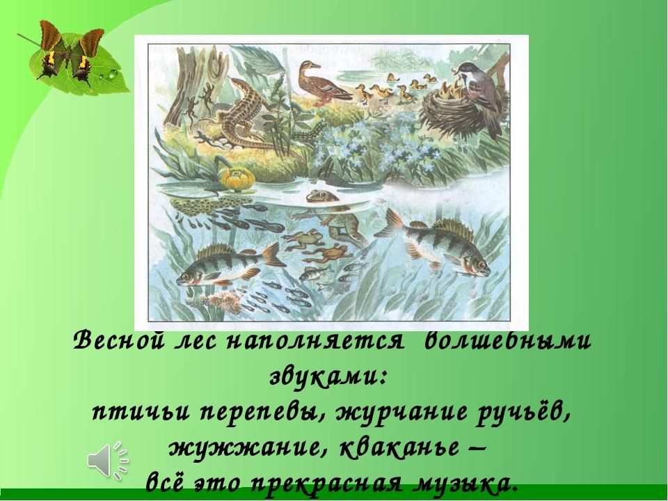 Весной лес наполняется волшебными звуками: птичьи перепевы, журчание ручьёв,...