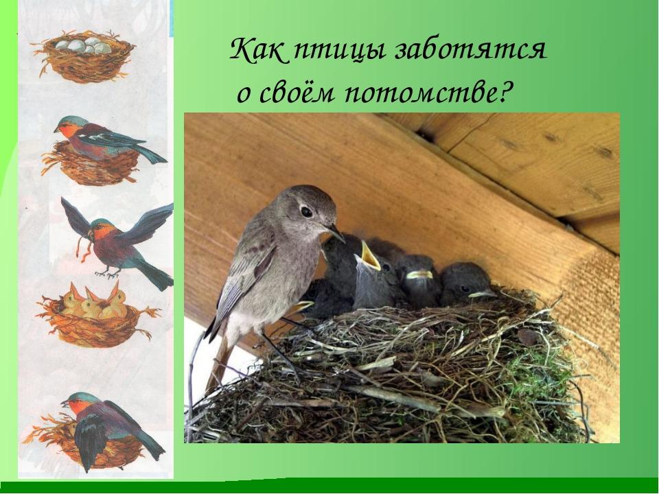 Как птицы заботятся о своём потомстве?