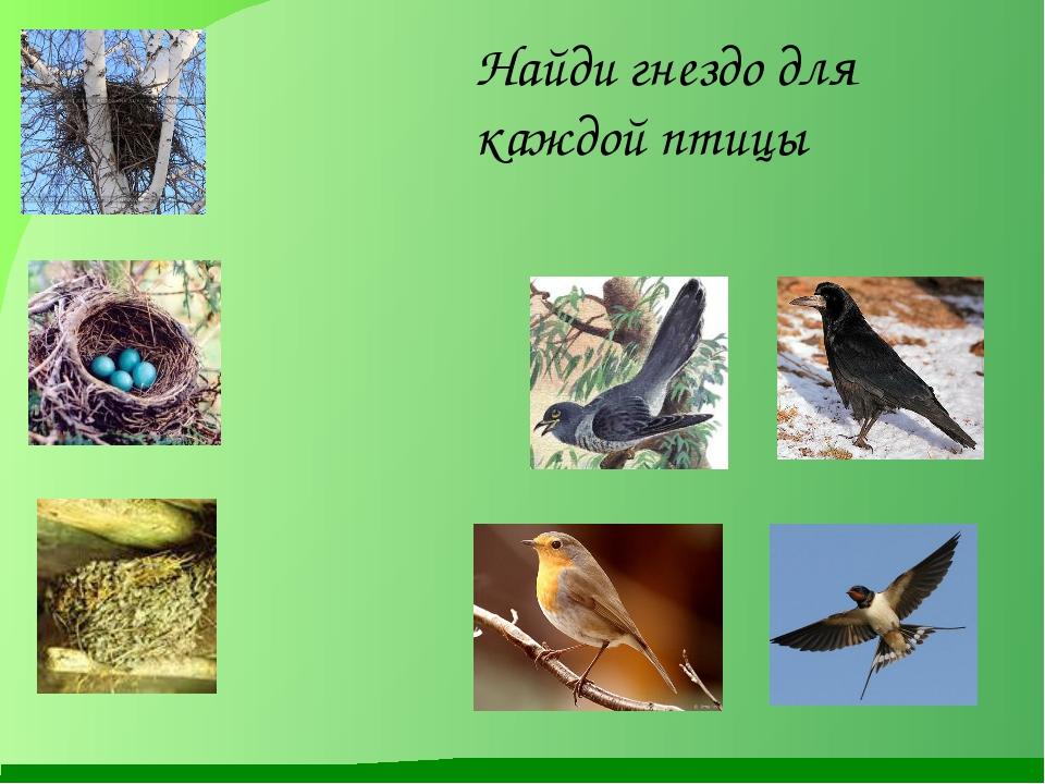 Найди гнездо для каждой птицы