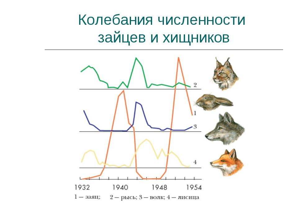 Колебания численности зайцев и хищников