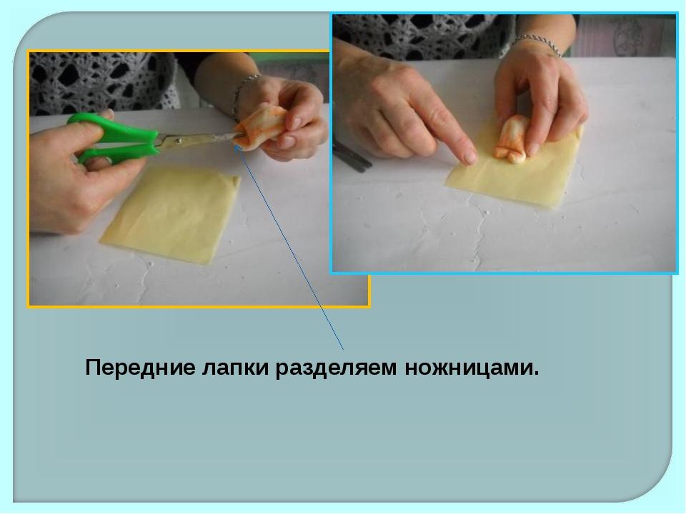 Передние лапки разделяем ножницами.